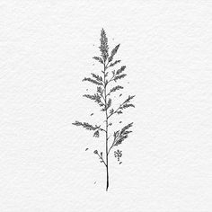 A simple wild grass drawing 🌾🌾🌾. Ink on paper. Grass Drawing, Plant Drawing, Illustration Botanique, Botanical Illustration, Henne Tattoo, Arte Linear, Henna Pen, Tattoo Style, Tatoo