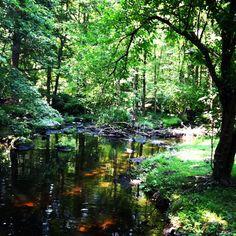 backyard creek