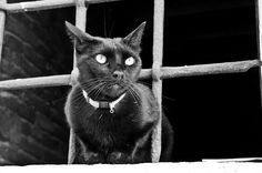 IMGP1757 Italy Venice Black Cat by Dave Curtis, via Flickr