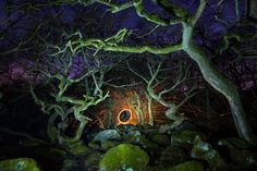 Dark Forest by James Mills on 500px
