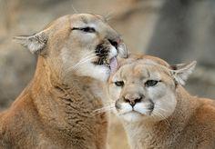 The happy couple Kima & Koya (photo by Mike Wilson)