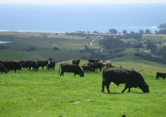 Hearst Ranch Beef – Free Range, Sustainable, Grass-fed, best freakin burger in all of Cambria! The steaks looked awesome too!