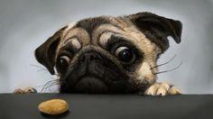 """En Sadık Dostlarımız Olan Köpeklerin Sevimli ve Komik Halleri """"En Sadık Dostlarımız Olan Köpeklerin Sevimli ve Komik Halleri""""  https://yoogbe.com/keyif/en-sadik-dostlarimiz-olan-kopeklerin-sevimli-ve-komik-halleri/"""