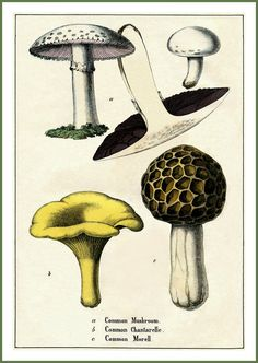 Kitchen Art Mushrooms Victorian 1860  Print by BloominLuvly