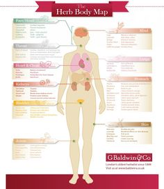 """Certain herbs are have traditionally been associated as being particularly beneficial for restoring vitality and healing certain organs and body systems.  This wonderful infographic entitled """"The Herb Body Map"""" from G Baldwin & Co illustrates which herbs are commonly associated and used for which part of the body."""