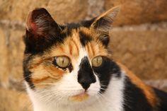 Cats in Roman ruins