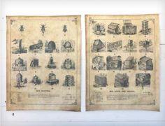 Apiary Printed Canvas