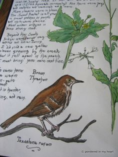 Watercolor nature journal pages