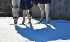 winter horse  Katja Wulfers©