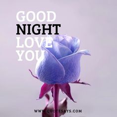 Good Night Flower Good Night Love You, Good Night Flowers, Beautiful Good Night Images, I Love You Images, Good Morning Images, Good Morning Quotes, Good Night Greetings, Beautiful Flowers Wallpapers, Inspiring Quotes About Life