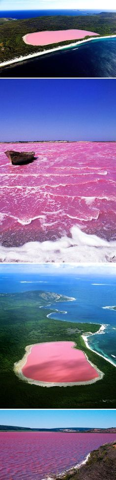 Pink Colored Lake Hillier in Australia Lake Hillier, Middle Island, Western Australia. The only naturally pink lake in the world. The only naturally pink lake in the world. Western Australia, Australia Travel, Pink Lake Australia, Australia 2017, Cairns Australia, Visit Australia, Dream Vacations, Vacation Spots, Pink Lake