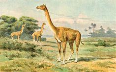 Alticamelus by Heinrich Harder (1858-1935)
