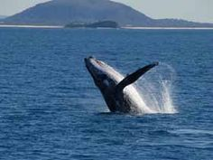 Whale watching-CHECK!