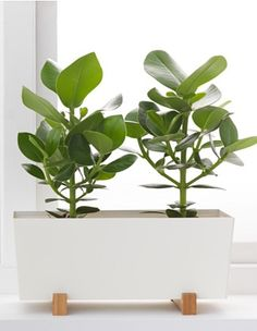 Via IKEA | Bittergurka Plant Pot