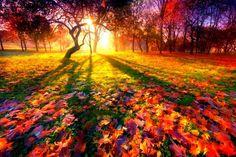 Осеннее равноденствие 2017 дата и время, что нужно делать: Дни равноденствия — это точки, от которых начинается смена времен года