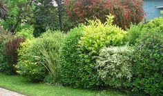 El jardín de Ofelia