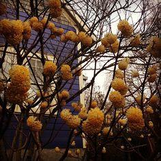 Spring time in Portland