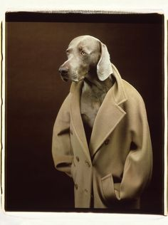Max Mara's latest shoot is adorable, uses dogs as models | Fashion Journal