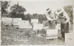 Social Revolution (?): United States. New York. Mt. Lebanon. Shaker Communities: Shaker Communities, United States: At Work In The Bee Garden, North Family Shakers, Mt. Lebanon, N.y.