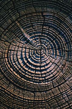 Redwood Tree Rings     http://www.calacademy.org/exhibits/california_hotspot/images/redwood_tree_rings.jpg