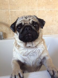 Get me out of this bath now
