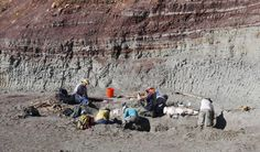 A field team excavating vertebrate fossil remains (Ghost Ranch).
