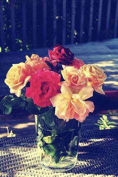 roses campari, bassin d'Arcachon, ©Corinne Granger