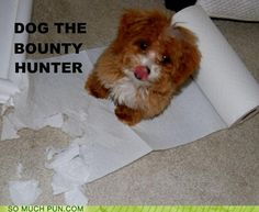 funny puns - SMP CLASSIC: Dog, the Bounty Hunter Funny Animal Pictures, Funny Animals, Cute Animals, Animal Pics, Silly Pictures, Hilarious Pictures, Small Animals, Dog Pictures, Baby Dogs