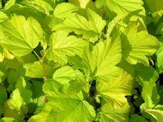 Garden Plants, Plant Leaves, Darts, Vegetables, Nature, Autumn Leaves, Branches, Naturaleza, Vegetable Recipes