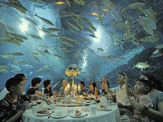 CHINE-Tianjin Haichang Polar Ocean World Aquarium visitors treated to extraordinary 'underwater' dinner party Tianjin, Aquarium Photos, International Waters, Georgia Aquarium, Image Of The Day, Paris, Photos Of The Week, Under The Sea, Animal Photography