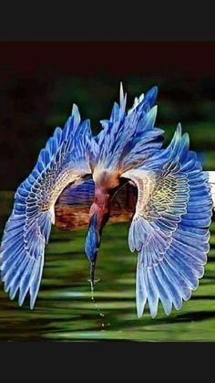 Beautiful Creatures, Animals Beautiful, Cute Animals, Most Beautiful Birds, Cute Birds, Pretty Birds, Funny Birds, Exotic Birds, Colorful Birds