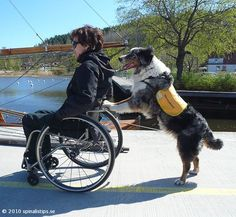The service dog pushes the user who sits in the wheelchair