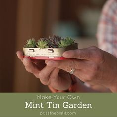 - DIY Garden in a Mint Tin Fab video for upcycling mint tins into gardens. Grow succulents, sprouts or give as a gift. Perfect for the holidays, container gardening, fairy gardening and spaces needing cheer. Organic Gardening, Gardening Tips, Fairy Gardening, Fairies Garden, Hanging Succulents, Cacti And Succulents, Succulents In Containers, Diy Garden Projects, Garden Crafts