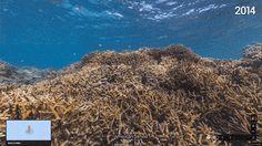 American Samoa Airport Reef Google Street View UnderWater