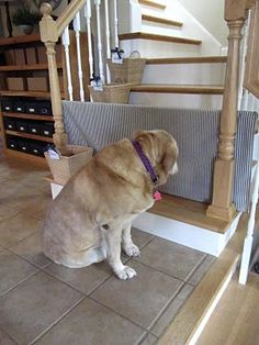 DIY baby/pet gate.  Easy and cheap.