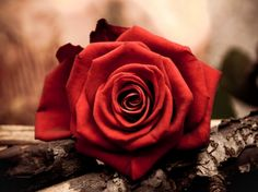 Beautiful red rose - Other Wallpaper ID 1113722 - Desktop Nexus Abstract