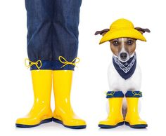 George believes that when life throws you a rainy day (two or three in our case) you should get out there and play in the puddles. With Guvon's last minute rates for this coming weekend starting at only pp sharing. I'd get my wellies on if I were you. Cute Rain Boots, Snow Gear, Passion For Life, Real Dog, Wide Calf Boots, Real Friends, Workout Gear, Calves, Best Gifts