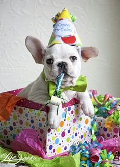 When does my party start? Break out the champagne, I'm ready to go! Happy Birthday to me!