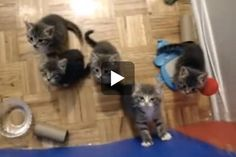 ♥ Five Tiny Fosters