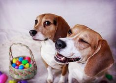 <3 happy easter...