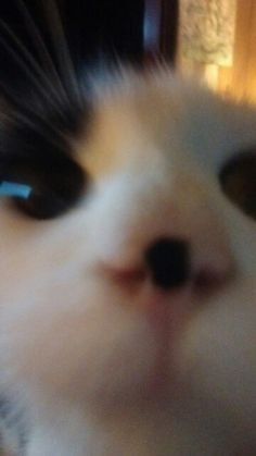 She heard the count down and just had to check it out Kittens Cutest, Cats And Kittens, Cute Cats, Cute Baby Animals, Funny Animals, Cute Cat Memes, Pets 3, Cat Aesthetic, Cat Boarding
