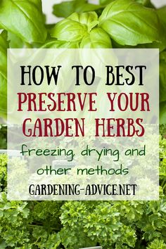 Freezing Herbs is probably the easiest way of preserving surplus but this method is not suitable for all culinary herbs. Learn how to freeze herbs and other methods like drying or marinating. Click on the image to find out more...