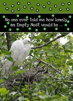 Lonely Empty Nest, Mama Egret Photo Standing in Her Abandoned Nest Greeting Card by Coos River Dancing.