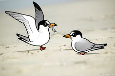 Birdorable Least Terns