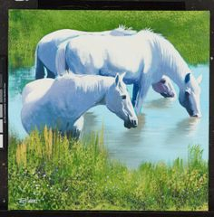 """Camargue Horses"" by Terry Wood"