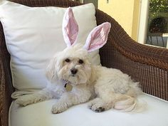 Keep the Tradition of the Easter Bunny Going - iVillage