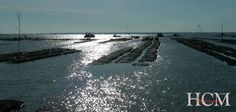 Les HUÎTRES Charente Maritime sont des huîtres de pleine mer (fines ou spéciales), OU des huîtres affinées en claires (fines de claires ou spéciales de claires).