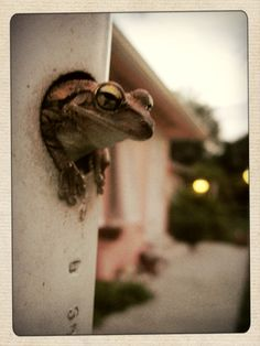 frog popping out of the hole on a flagpole.  made me laugh every time I saw them!