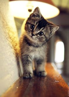 Legendary The cutest baby animals: pictures of kittens, dogs, elephants and other pets . - Legendary The cutest baby animals: pictures of kittens, dogs, elephants and other pets … - Baby Animals Pictures, Cute Baby Animals, Animals And Pets, Funny Animals, Funny Cats, Animals Kissing, Animals Sea, Animals Images, Kittens And Puppies