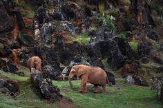 Brief Encounter.... by paulkeates #animals #animal #pet #pets #animales #animallovers #photooftheday #amazing #picoftheday
